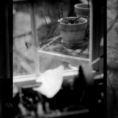 graflex paper negatives