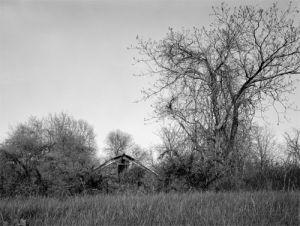 ar.50.jpg